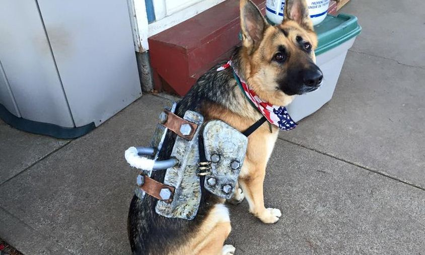 fallout 4 dogmeat cosplay scr1