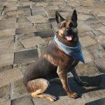 light-dog-armor-dogmeat-6
