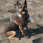 light-dog-armor-dogmeat-7