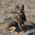 light-dog-armor-dogmeat-8