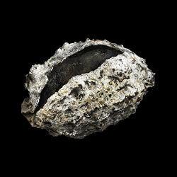 dark-souls-3-torgovcy-vorony-spisok-obmenivaemyx-predmetov-shriving-stone_min
