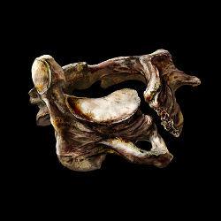 dark-souls-3-torgovcy-vorony-spisok-obmenivaemyx-predmetov-vertebra-shackle_min