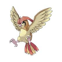 017 Pokemon Pidgeotto