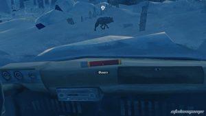 Агрессивные волки